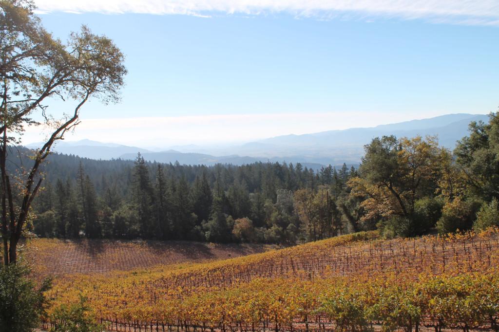 Napa Valley Cade Vineyard