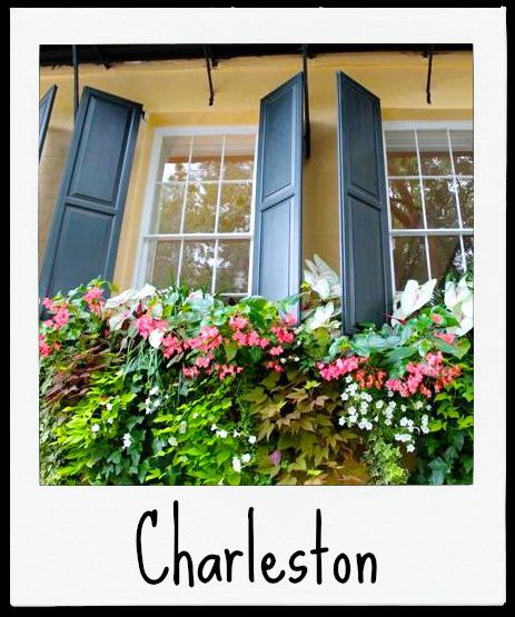 Charleston Polaroid