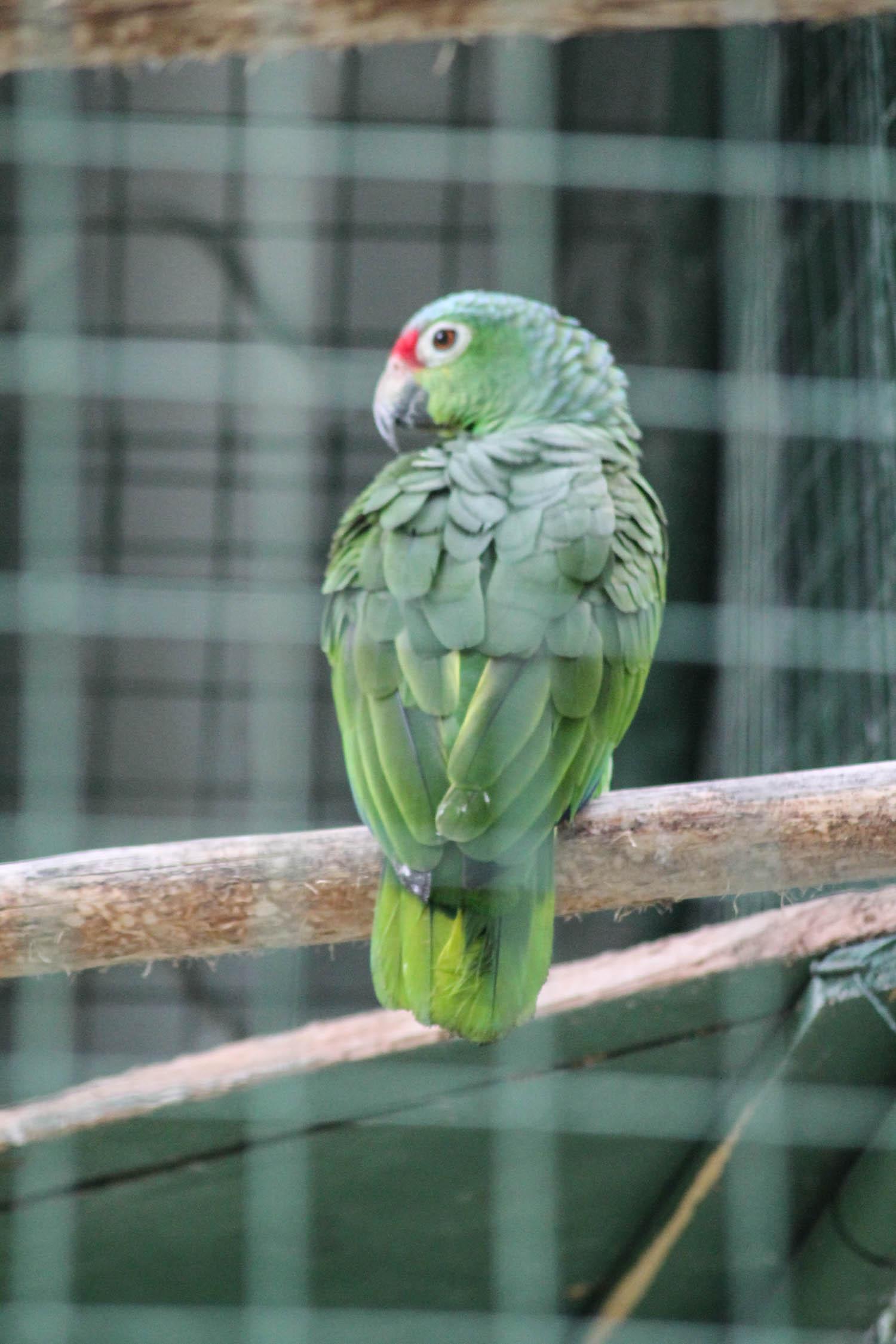 La Fortuna Costa Rica-15