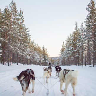 Why You Should Visit Lapland in Winter