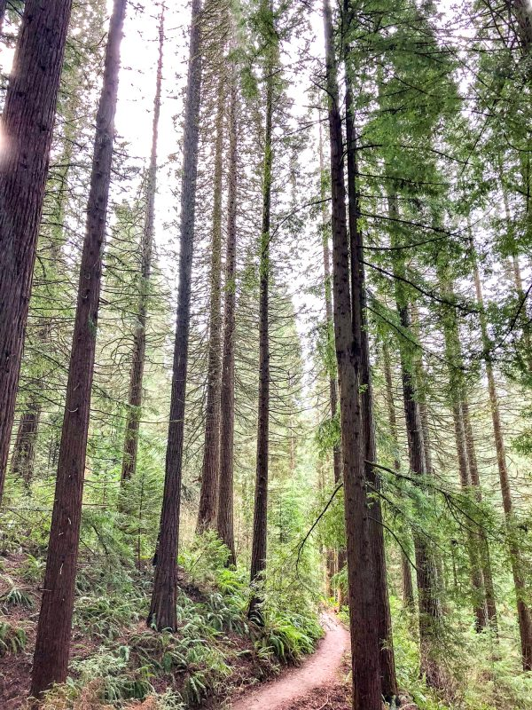What to do in Portland, Oregon - Hoyt Arboretum