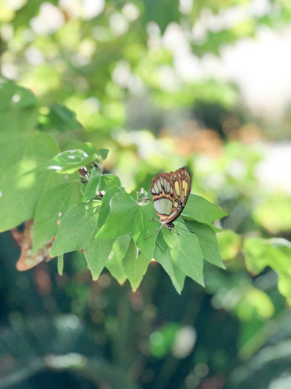 What to do in Scottsdale - Desert Botanical Garden
