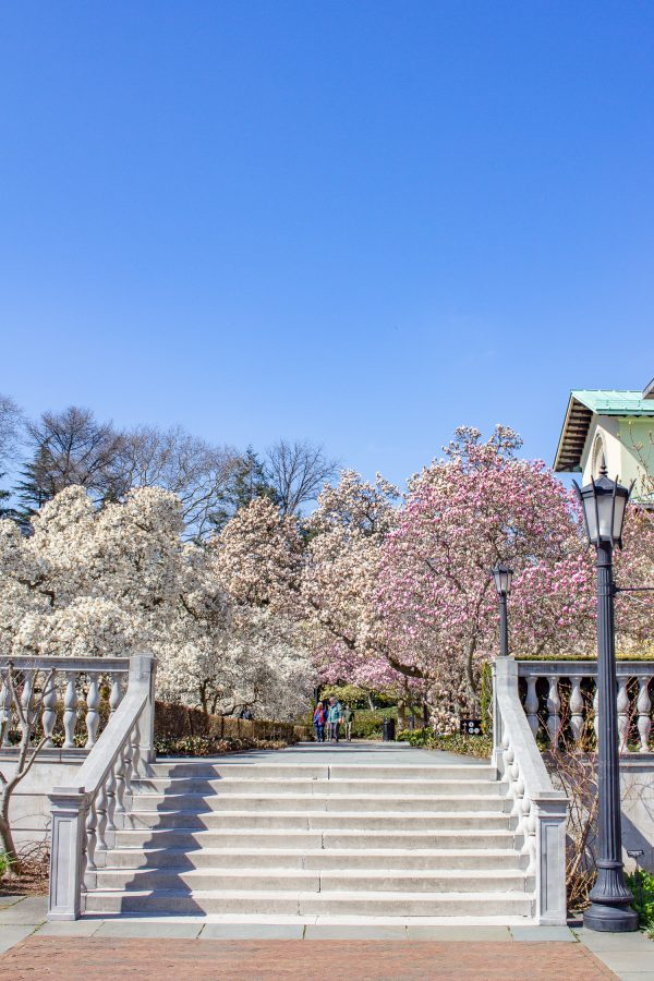 What to do in Brooklyn - Brooklyn Botanic Garden in April