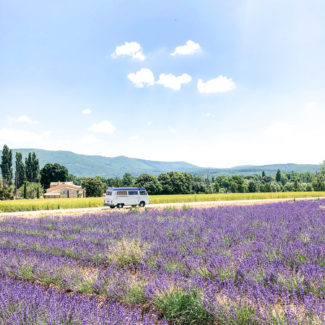 Seeing the Lavender in Provence