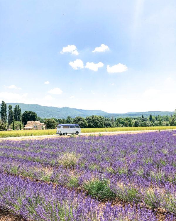 sault lavender 2