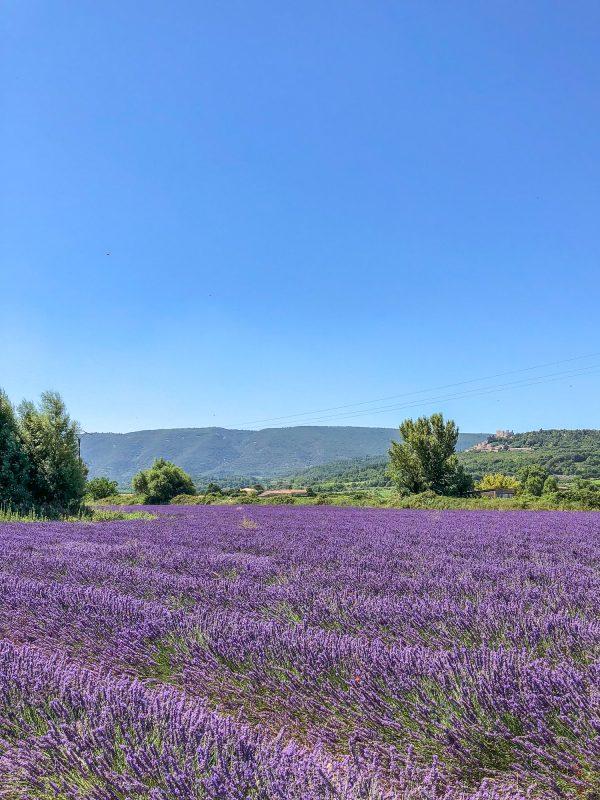 seeing lavender