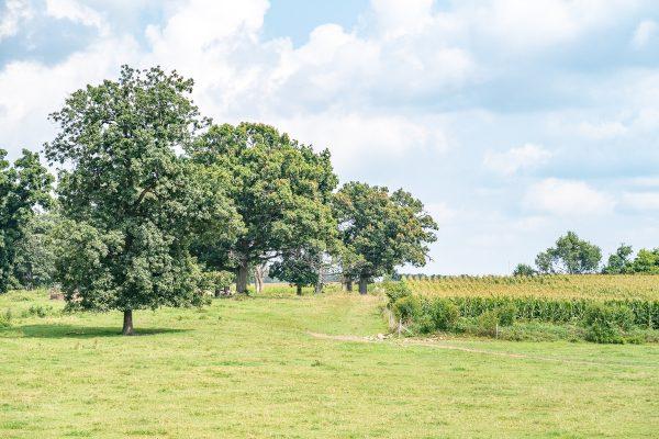 Hildebrandt Farm 2