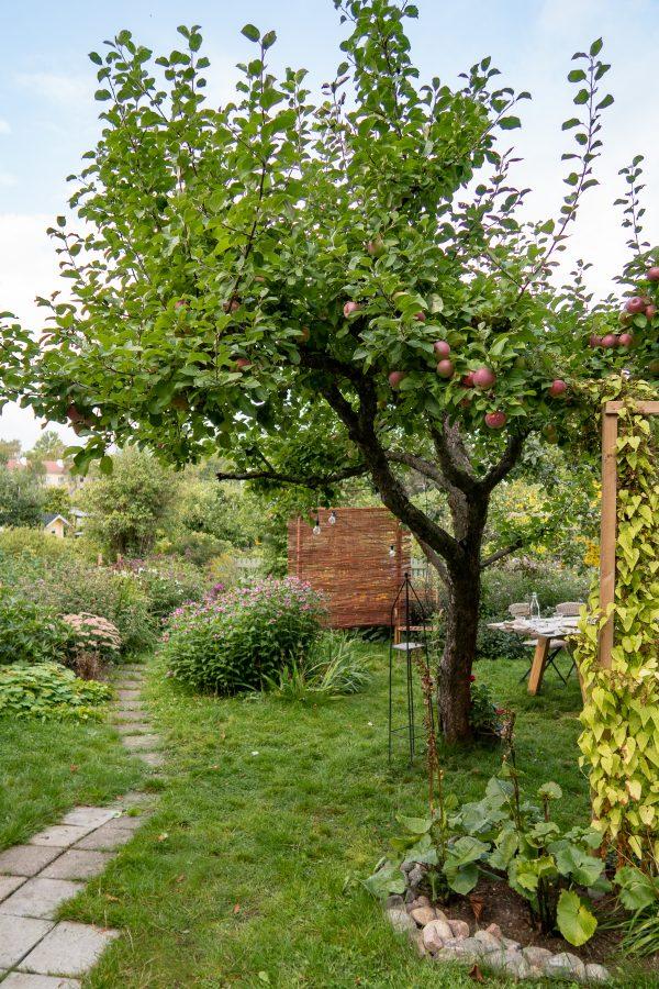 Helsinki 2018 allotment garden 4