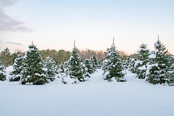Kennebunkport Christmas Prelude 20