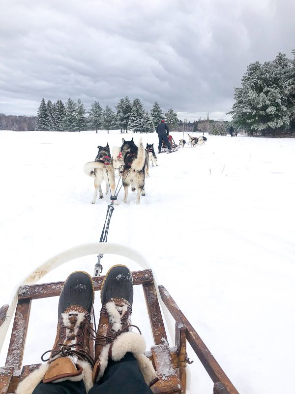 Dogsledding in Quebec 4