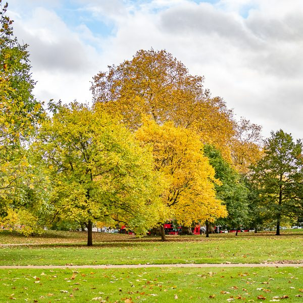 What to do in Mayfair and Marylebone | Hyde Park