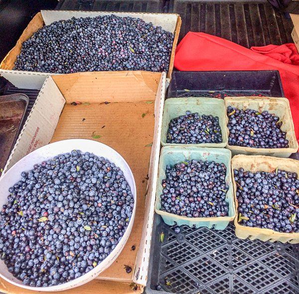 Maine Foods Wild Blueberries