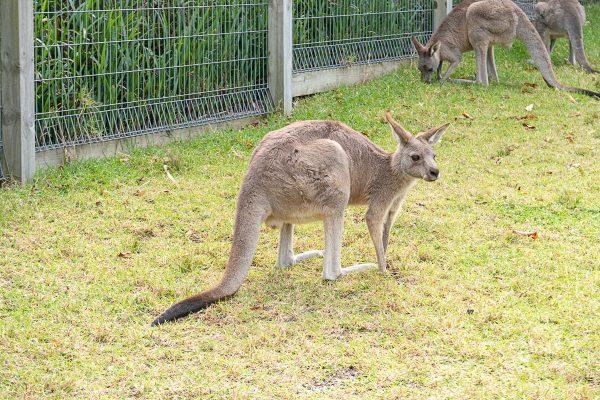Australia 25