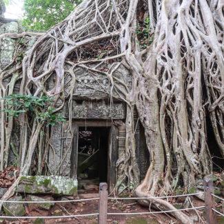Hello from Cambodia!