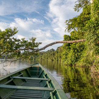 A Trip to the Amazon Rainforest