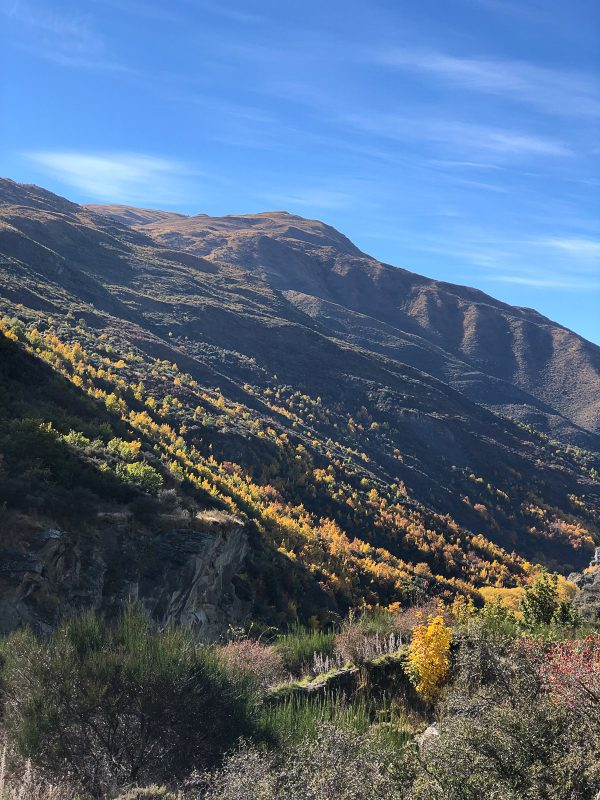 What to do in Queenstown 5