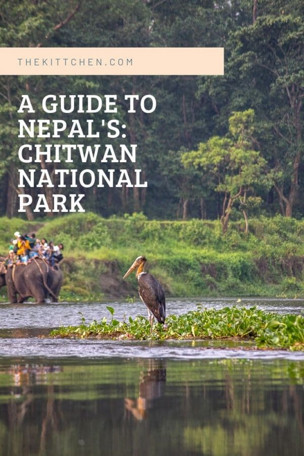 Did you know that Nepal has a jungle? And that it is home to rhinos, tigers, and elephants? It's easy to assume that Nepal is all mountains, but the southern part of the country has a jungle.