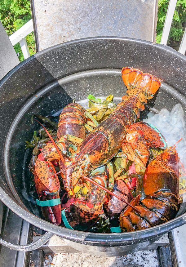 Traditional Maine Lobsterbake at Home 13