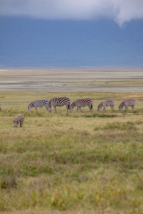 Serengeti 13