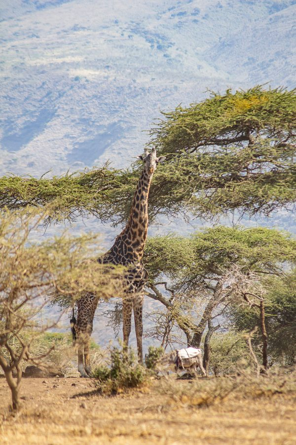 Serengeti 3