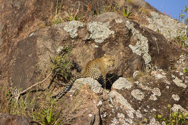 Serengeti 9