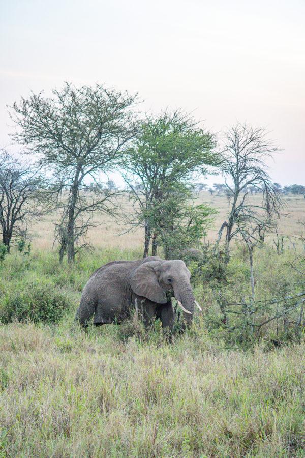 Serengeti Safari 2