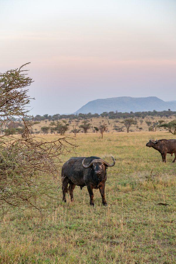 Serengeti Safari 3
