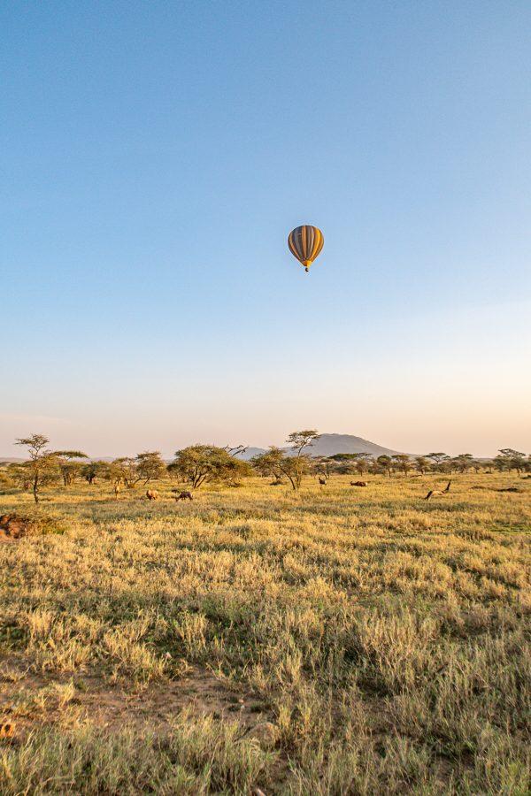 Serengeti Safari 4