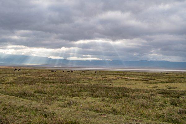 Serengeti Safari 8